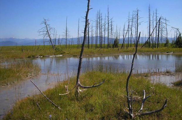 Паровоз, затонувший в XIX веке, хотят поднять из болот в Краснодарском крае