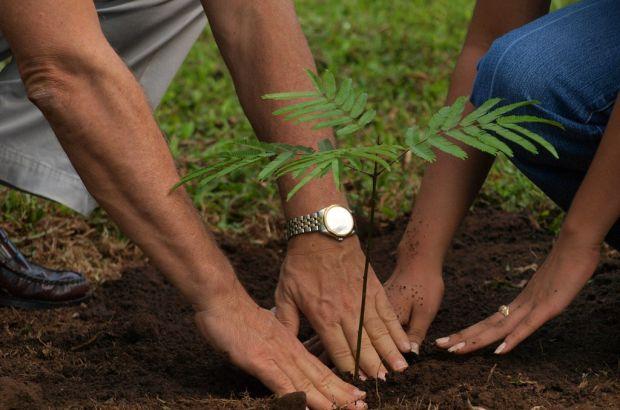 Железнодорожники Татарстана собираются высадить 63 тысячи кустарников и деревьев