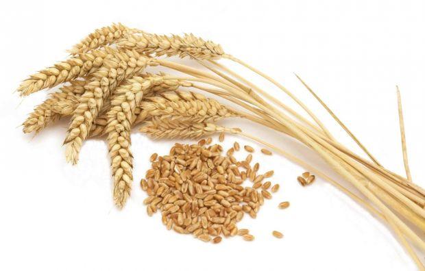 Новые возможности в доставке зерна в Японию